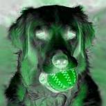 GreenPlayerDE
