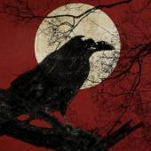 Night_Raven