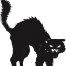 OneEyed_Cat