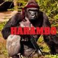 Harambo