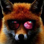 FosterFox