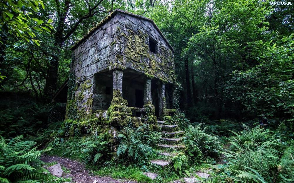 201684_las-zarosla-domek-schody-paprocie-mech-ruiny.jpg