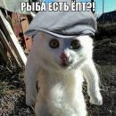 Andrey0494