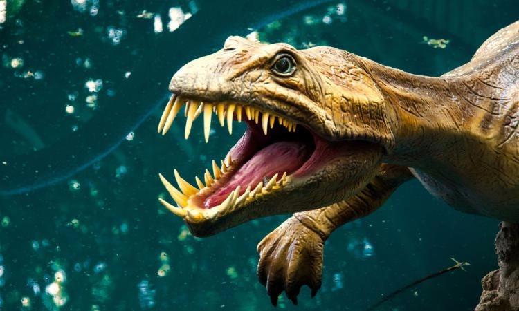 ostanki-dinozavra-kogot-molniya.jpg.5d5375d39e7c94c8057d3ca924fd5f29.jpg