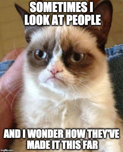 Top-30-Funny-Cat-Memes-Funniest.jpg