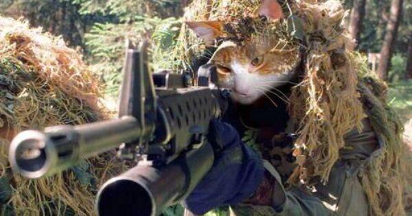 armycat.jpg