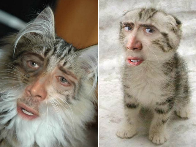 cage-cats2.jpg