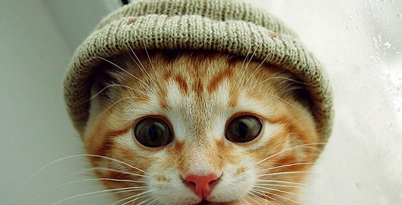 cuidados-com-gato-no-inverno-cover.jpg