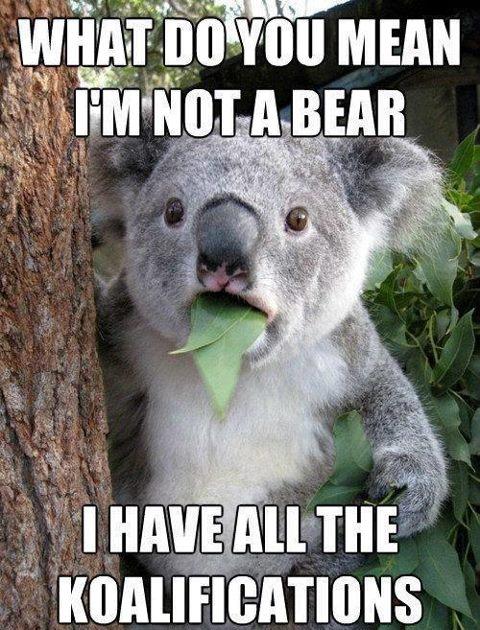 koala-bear.jpg.84b0b2cc89757a0a50f97cf77ae6c245.jpg
