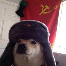 soviet dog.jpg