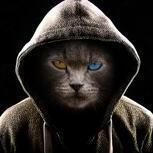 Derp_Kittenn